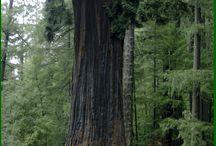 Cool Tree Things