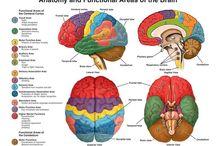 neurostuff