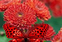 butterfly new