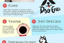 Dog Fun Facts