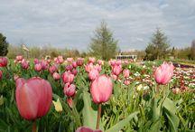 Parks und Gärten in Ostfriesland / Üppige Rhododendronhaine in der Ammerländer Parklandschaft, romantische Schlossparks, liebevoll gestaltete Bauerngärten und jede Menge Veranstaltungen rund ums Beet, lassen die Herzen von Gartenfreunden in Ostfriesland höher schlagen!