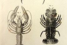 Crostacei / Shellfish