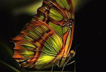 Butterflies ♥♥