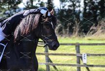 Hackpen horses