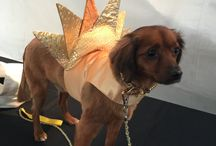 """LeChien 2015 Fashion Week El Paseo Palm Springs / Dog Fashion Show to benefit Humane Society of the Desert. Theme was 70's and 80's Disco. Spoiled Dog Designs dressed Roxie Davenport and Jack Rae who walked with his Mom, Bianca Rae as """"Sunny"""" and Cher."""