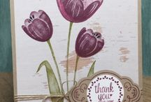 SU Tranquil Tulips