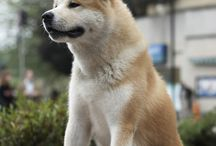 Hachiko / Hachiko the dog tale. This is one of my favorite movies... Ever