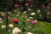 Magia róż