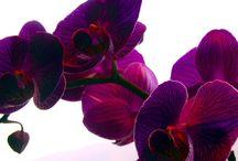 Indoor plants / by Joy Bridge