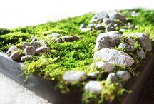 мох и камни