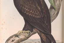 "John Gould - ""Birds of Australia"", Vol 1-7"