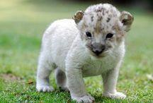 baby dieren