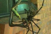 Insectos gigantes de Australia / Algunos de los insectos y gusanos más grandes del mundo en Australia