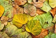 Leaf - daun