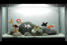 Aquatic Exhibit