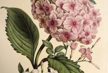 flowers/botanical