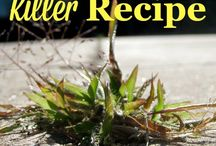 Weed Killer Solutions