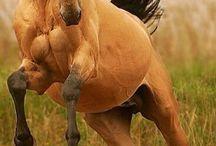 best horse photos