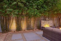 Bamboo - Landscaping