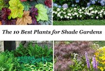 Plants for dhade gardens