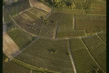 paesaggio vitivinicolo