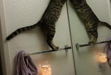 gatti / a chi li piace i gatti trova tutto qui