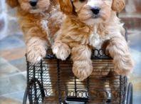 Dog's / Doggies