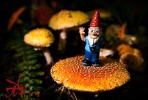 Miscellaneous Photos / Mushroom Festival Garden Gnome.