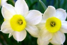 το δικο σου λουλούδι