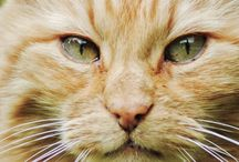 Cats of Norway / Rescued cats- or cats in need of rescuing in Rogaland, Norway.