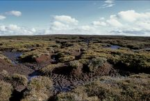 Irish Bog color inspiration / by Little Field Birch