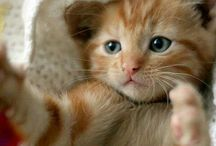 Animals so sweet