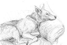 Hunde zeichnen
