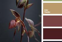 Colores y paletas de colores