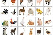 Domácí a hospodářská zvířata