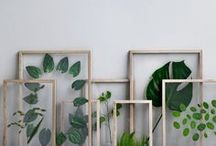 quadros plantas
