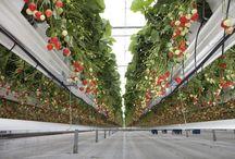 high tech gardening / by Fresh Nation