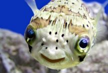Nature Study: Fish & other water creatures