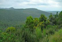 Various pics along Garden Route. Knysna, Knysna Forest, Wilderness, Pletenberg Bay along the South African coast.
