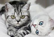 حیوانات خانگی / مطالب مربوط به حیوانات خانگی و نگهداری از آن ها شامل بیماری های حیوانات، تصاویر حیوانات خانگی دوست داشتنی و دانستنی ها