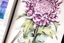 Watercolor crisantemo lilla