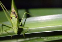 Insects / Films on insects of Eastern North America. Join Films Nature web TV on Youtube to see web series on wildlife.