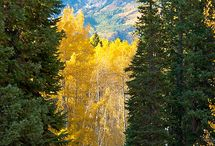 Colorado / by Meghan Murphy