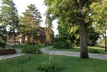 July 2, 2012 campus storm damage