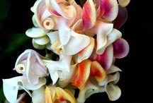 Garden Colours