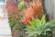 St Francis Garden Ideas