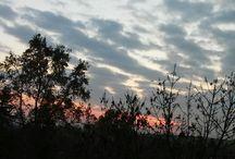 Sky (own)