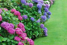 Сад / Сад огород садовые растения