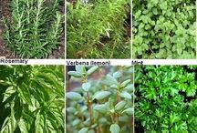 Herb: Individual (monograph),Uses & Properties / Recipes, Ideas