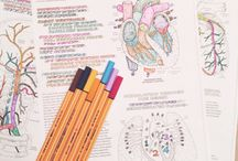 Motivação para estudar <3